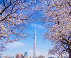 墨田区東京スカイツリーの写真